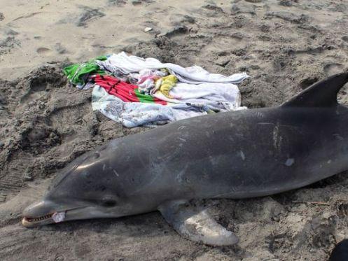 1375991909000-stranded-dolphin-in-nj
