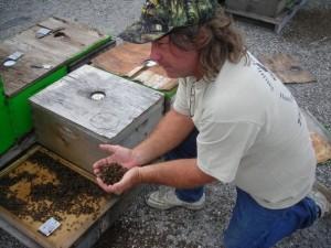 Dead Bees Melbourne