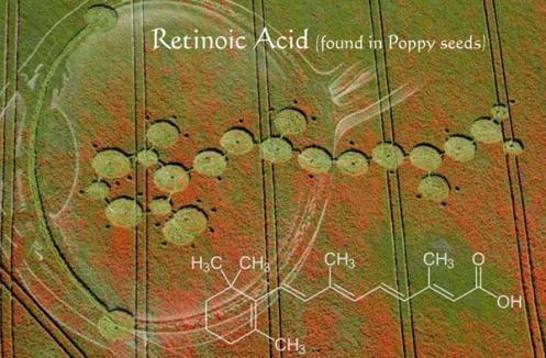 Retinoic-Acid2