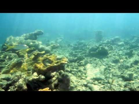 key west coral disease