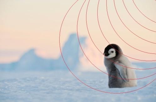 winter-critters-131205-670x440-penguin