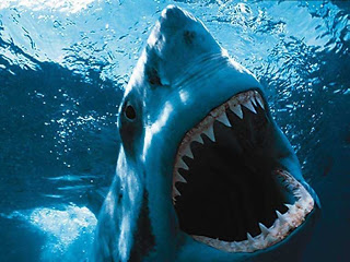 great-white-shark-picture-014