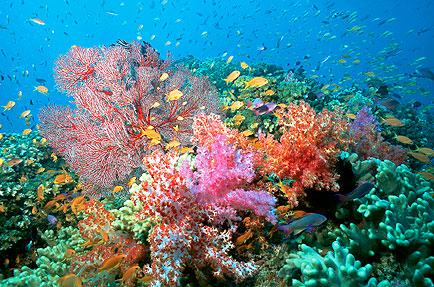 tree_corals