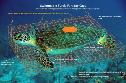 Green_Sea_Turtle_061022_French_Reef_KL_IMG_4313