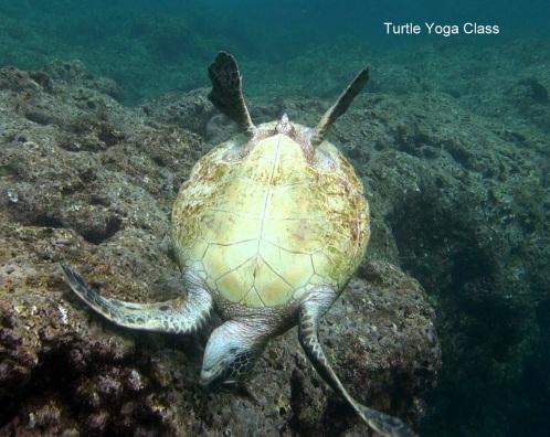 TurtleYoga