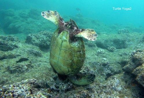 TurtleYoga2
