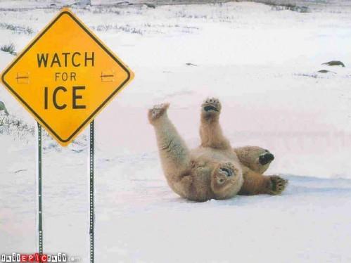 polar-bear-fail-theone-epic-fail-1292290294