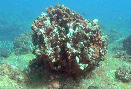 corroded reef6