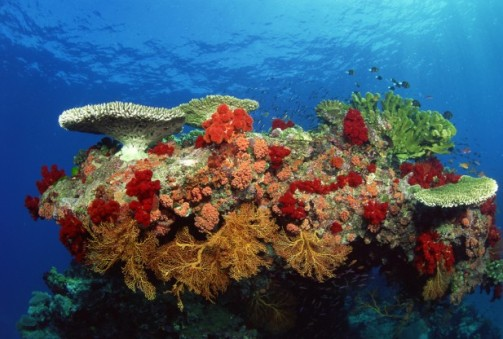Ecosystem-of-Coral-Reefs-Healthy-Coral-Reefs