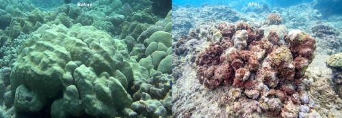 mound coral before and after
