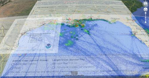 Gulf Cetacean Stranding