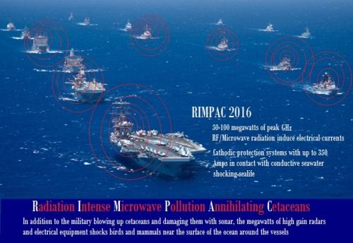 rimpac 2016 cetaceans