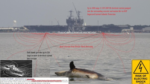 dp-pictures-dead-dolphin-found-floating-in-ham-w ICCP
